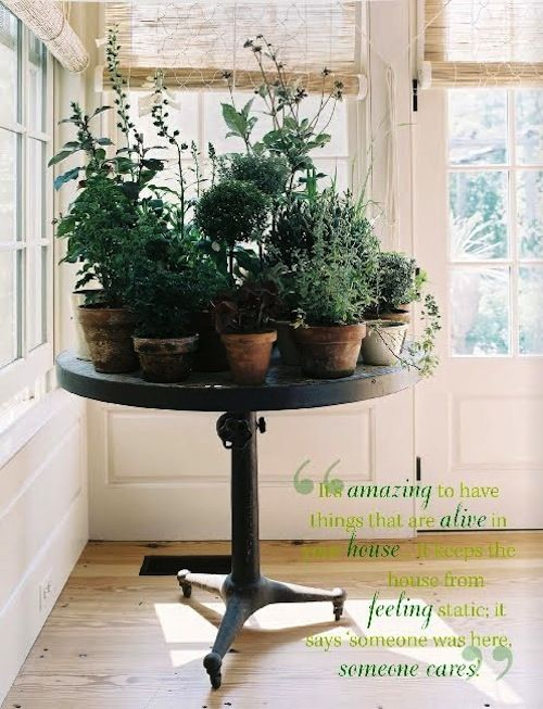 I heard that, for optimal life improvement, you should have 20 plants in your house. I don't know who came up with that number or how meaningful it is but, hey, it can't be bad, right?: Plants Can, Modern Gardens, Houses, Indoor Herbs, Indoor Gardens, Gardens Design Ideas, Herbs Gardens, Round Tables, Indoor Plants