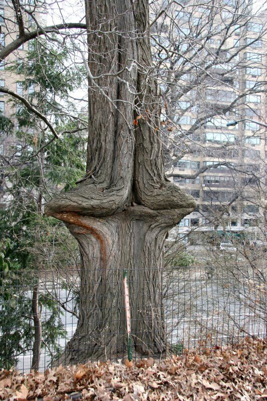 Best images about trees bark wood grains on