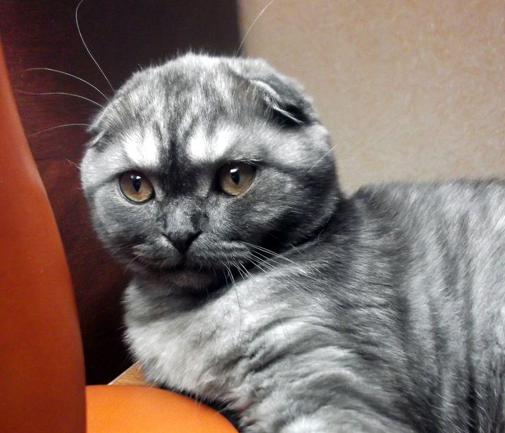 Мой плюшевый кот