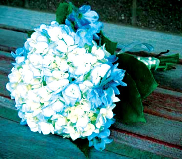 Hortensia in blue