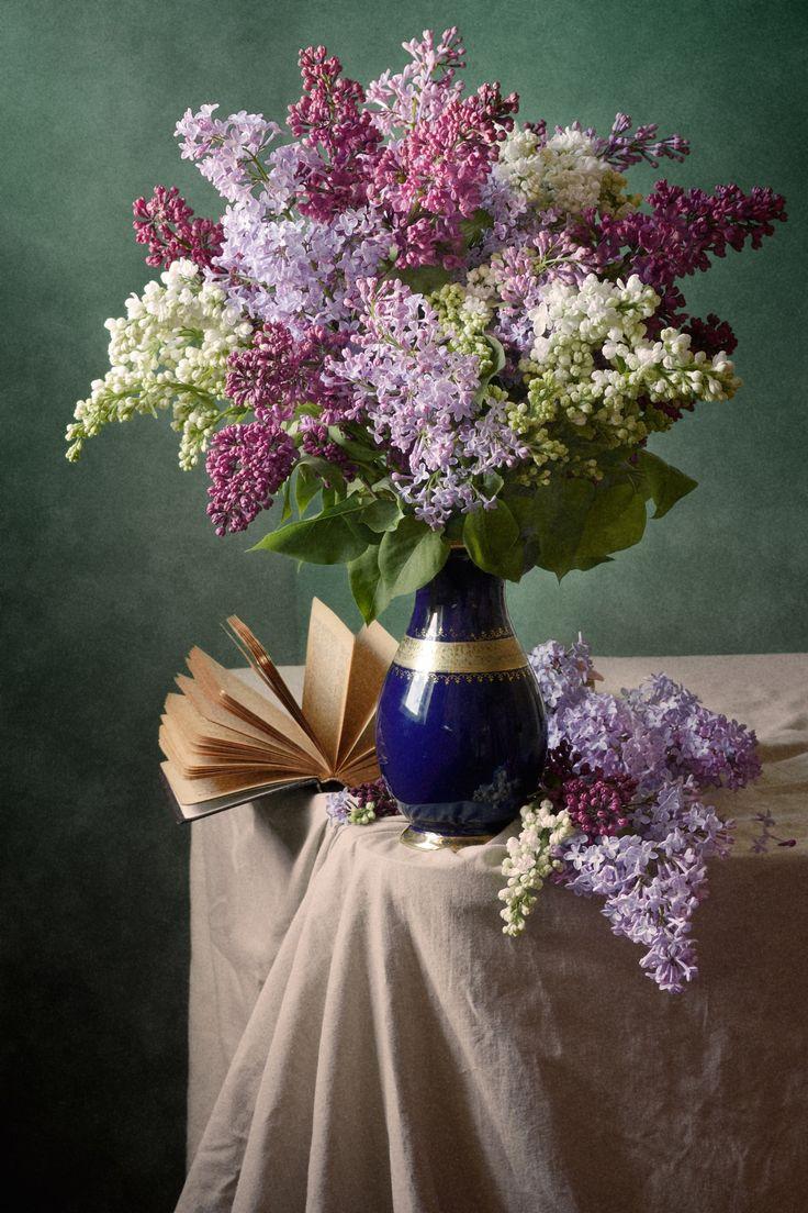 Colorful Blooming Lilac by Nikolay Panov