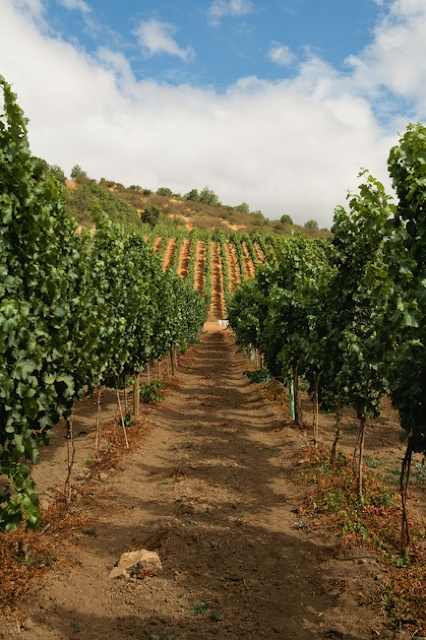 Terra Noble Winery, Chile