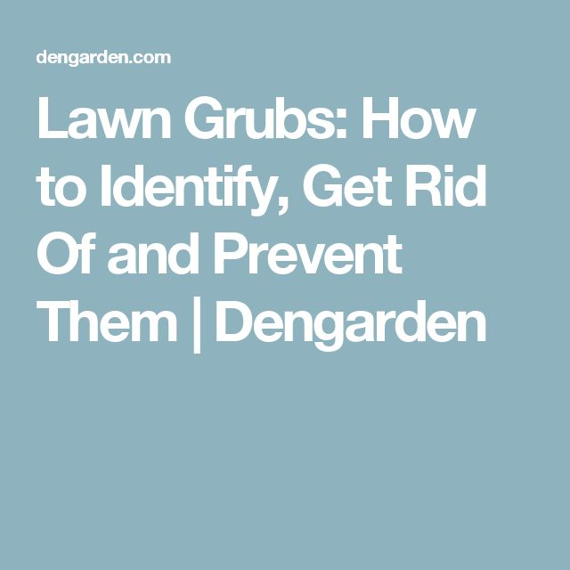 how to get rid of hairy grubs