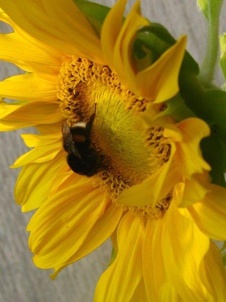 """bees floras"" by  http.//www.artwanted.com/HeliAarniranta©2013"