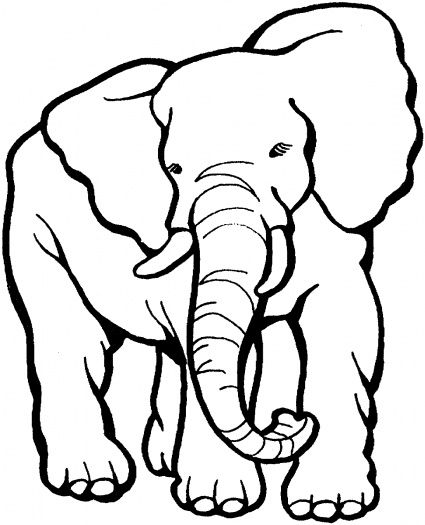 113 Best Images About Kids Zoo Printables Coloring Pages