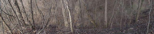 Jurnal A: pădurea deszăpezită