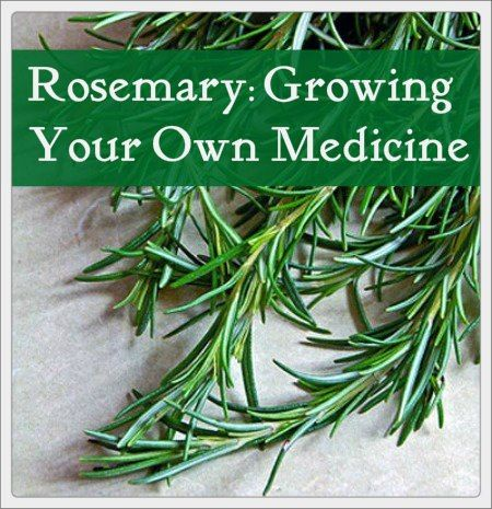 The health benefits of rosemary include: Reducing anxiety, elevating mood Boosting memory Brain protection Calming effects Pain relief Headache relief Protects against DNA damage Arthritis treatment, anti-inflammatory Skin tonic Hair tonic Digestion soother Immune booster Improving circulation Detoxifying the liver Cancer prevention (due to containing carnosol, a compound found to have anti-cancer properties)