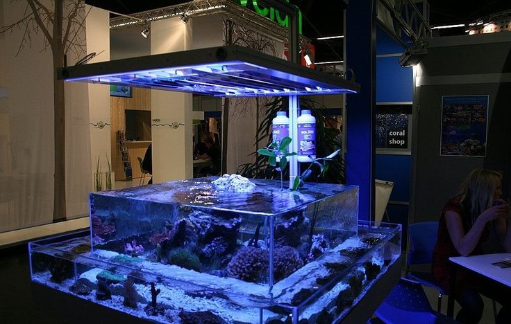 Aquarium Shop Design photo