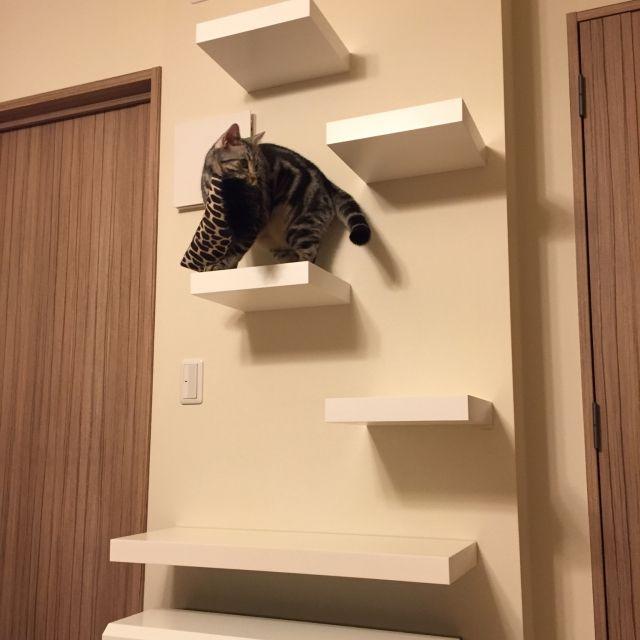 キャットウォークdiy 壁 天井 猫のいる生活 マンション 猫 などのインテリア実例 2016 05 08 19 11 48 Roomclip ルームクリップ インテリア インテリア 実例 キャット ウォーク Diy