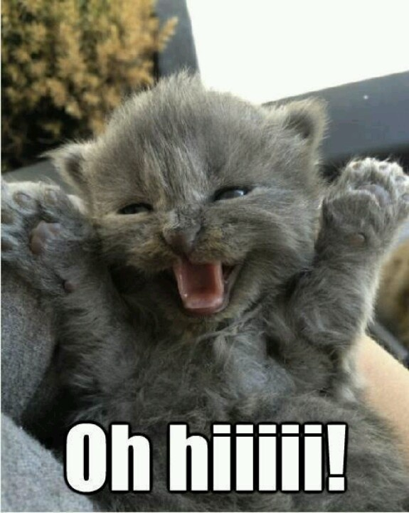 40eb88674d6c9a49c32cd377fc399bf7 funny animals adorable animals 273 best cats with words images on pinterest funny kitties, kitty