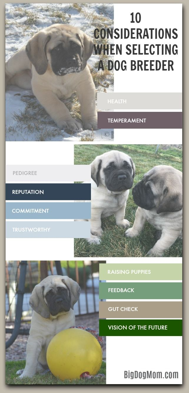 Selecting a dog breeder is an important decision that can have lasting implications over the life of your dog. Use these tips to make this decision wisely! Buying A Puppy From A Breeder / Buying A Puppy / Selecting A Puppy / Choosing A Puppy