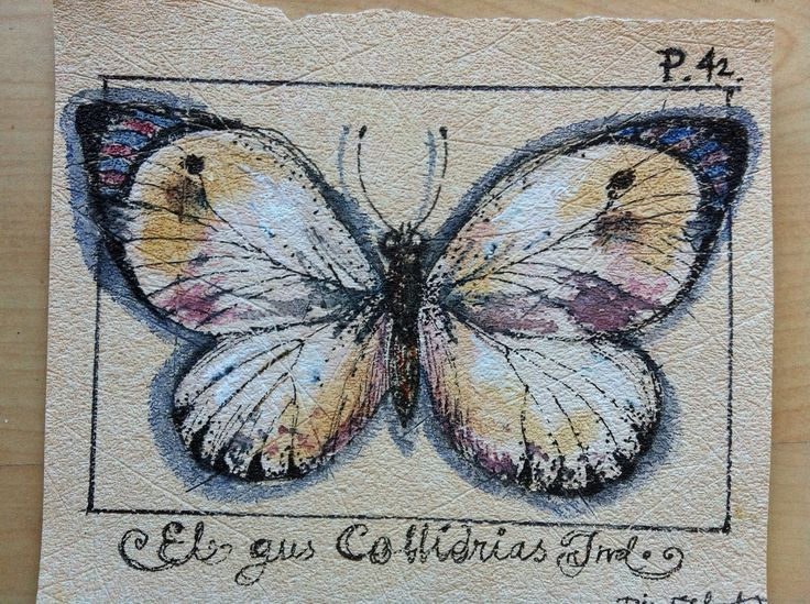 Butterfly mixt media by Tina Elfast