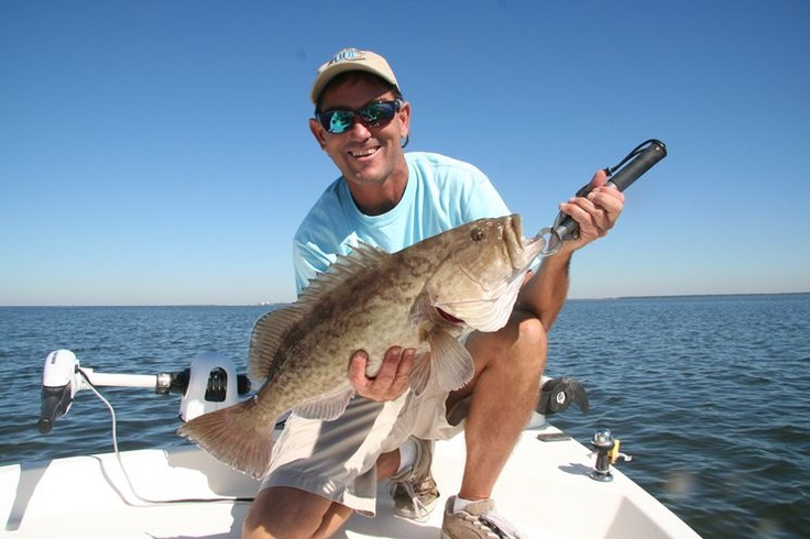 71 best florida fish images on pinterest florida fish for Florida state fish
