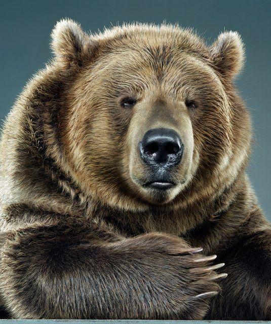 Bear Portraits By Jill Greensberg
