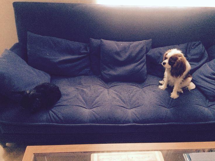 Můj Pejsek Charlie A Můj Králíček Bobíček/My Dog Charlie And My Rabbit Bobíček