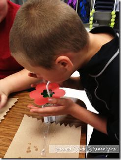 """Learning about Pollination - use juice boxes to make flowers, students drink nectar, eat cheetos without wiping hands for pollen, go to other flowers, and the """"pollen"""" will stick - From Second Grade Shenanigans"""