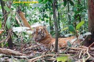 Kaya flora dan fauna di Taman Nasional Kerinci Seblat http://lovejambi.com/travel/2013/10/13/taman-nasional-kerinci-seblat-wisata-alam-di-jambi/1123.html/3