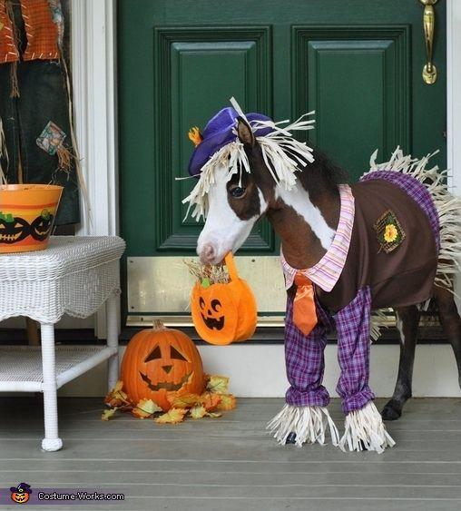 Gentle Carousel Miniature Therapy Horses - Halloween Costume Contest via @costumeworks