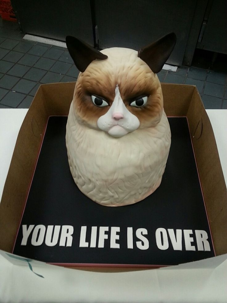 Grumpy Birthday cake....hahaha @Courtney Baker Baker Baker Baker Baker Baker Smith Grumpy Cake Cake Pops Steps by Bakerella #GrumpyCat #cake For more Grumpy Cat stuff, gifts, and meme visit www.pinterest.com/erikakaisersot