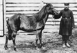 Tarpan (unknown if this was a seperate species or a horse breed). Last Tarpan died in 1909.
