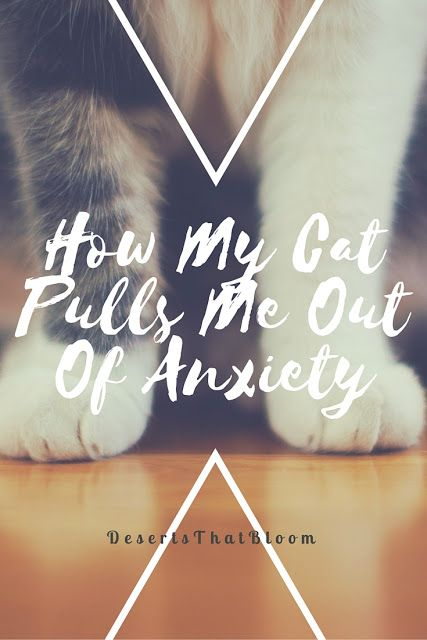 This links to a blog post about how to manage anxiety/stress with the help of your pet!