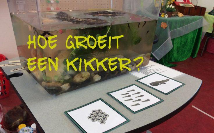 Onderzoekend leren met kikkers!