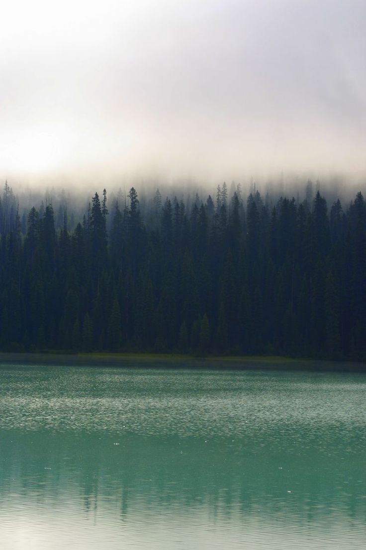 Calm, tranquil, serene. A quite forest in the morning mist.