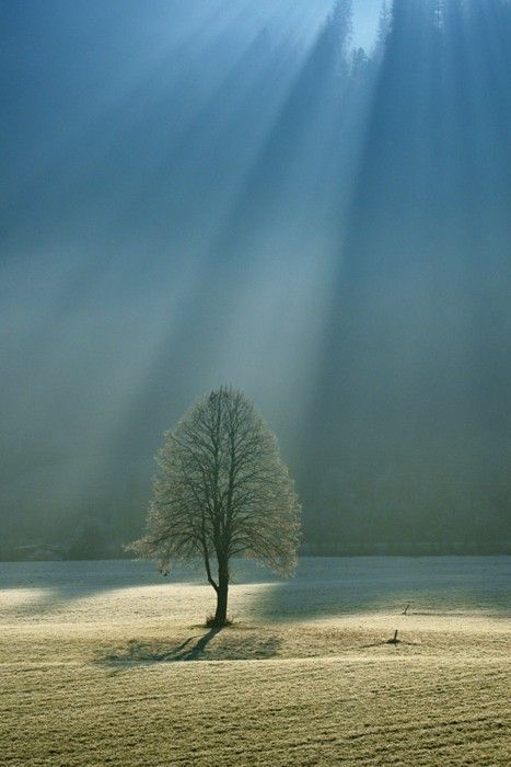 lone tree bathed in light