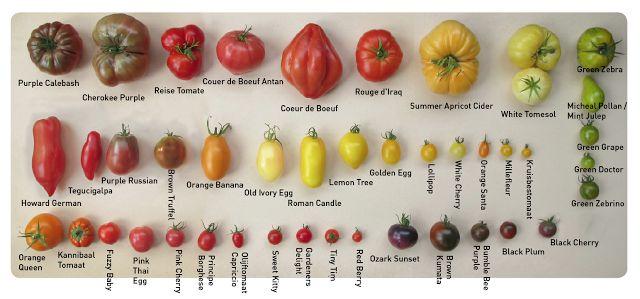 de tuinavonturen van mevrouw onkruid: Zadenlijst tomaten 2015