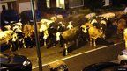 "Who said milk dosn't get delivered to your doorstep anymore?! Cows in a street. Photo: Clare Small. Around 35 cows escaped from a farm in Stockport, UK, and gathered in a housing estate in the early hours of Sunday. James Small said: ""It was the funniest wake-up call ever."