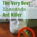 Best Homemade DIY Ant Killer