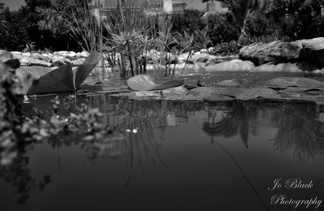 A small-lake