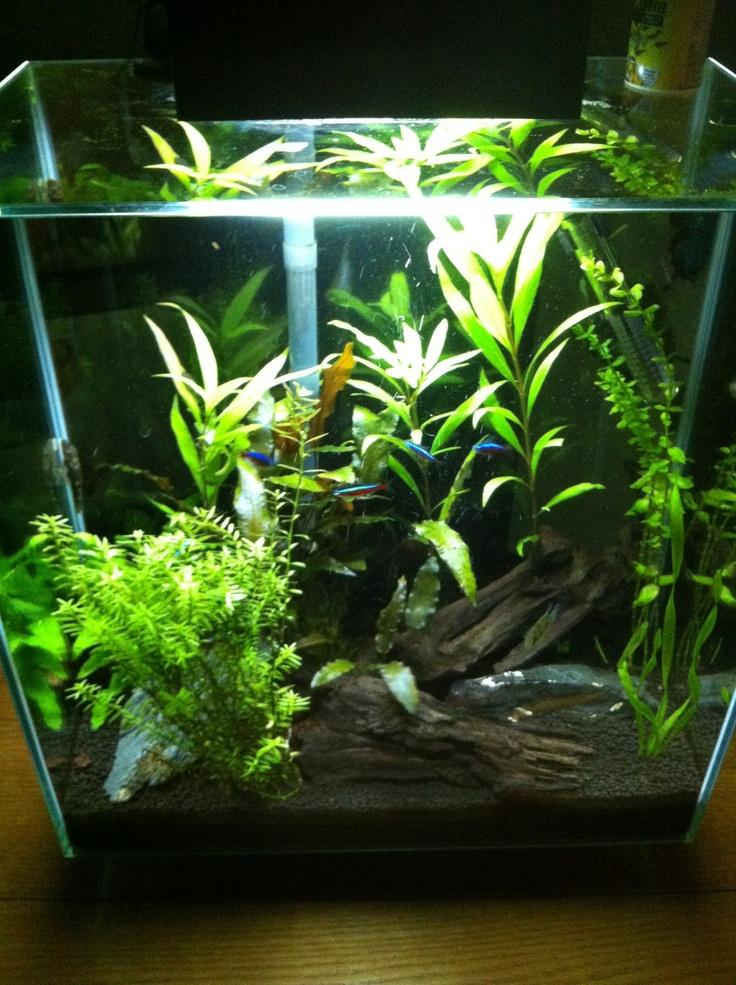 12 gallon fluval edge aquariums pinterest for Aquarium edge