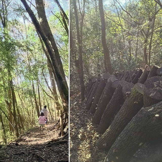 【maricototeshigoto】さんのInstagramをピンしています。 《* * 山をずんずん登っていくと、 そこは しいたけワンダーランド🍄❤ * #山 #森 #しいたけ #きのこの山 #前日に #義父母さん収穫してたので #小さいのしかなかった😅》
