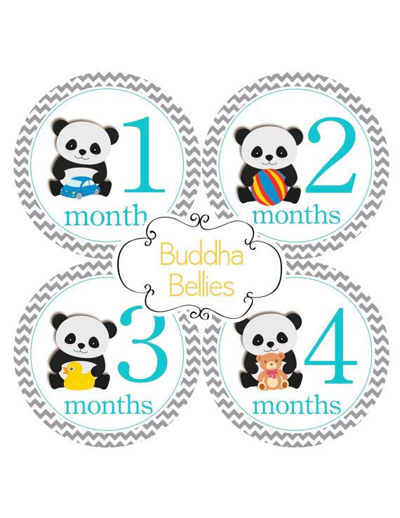 Hey, I found this really awesome Etsy listing at https://www.etsy.com/listing/257295078/panda-bear-month-stickers-for-baby-boy