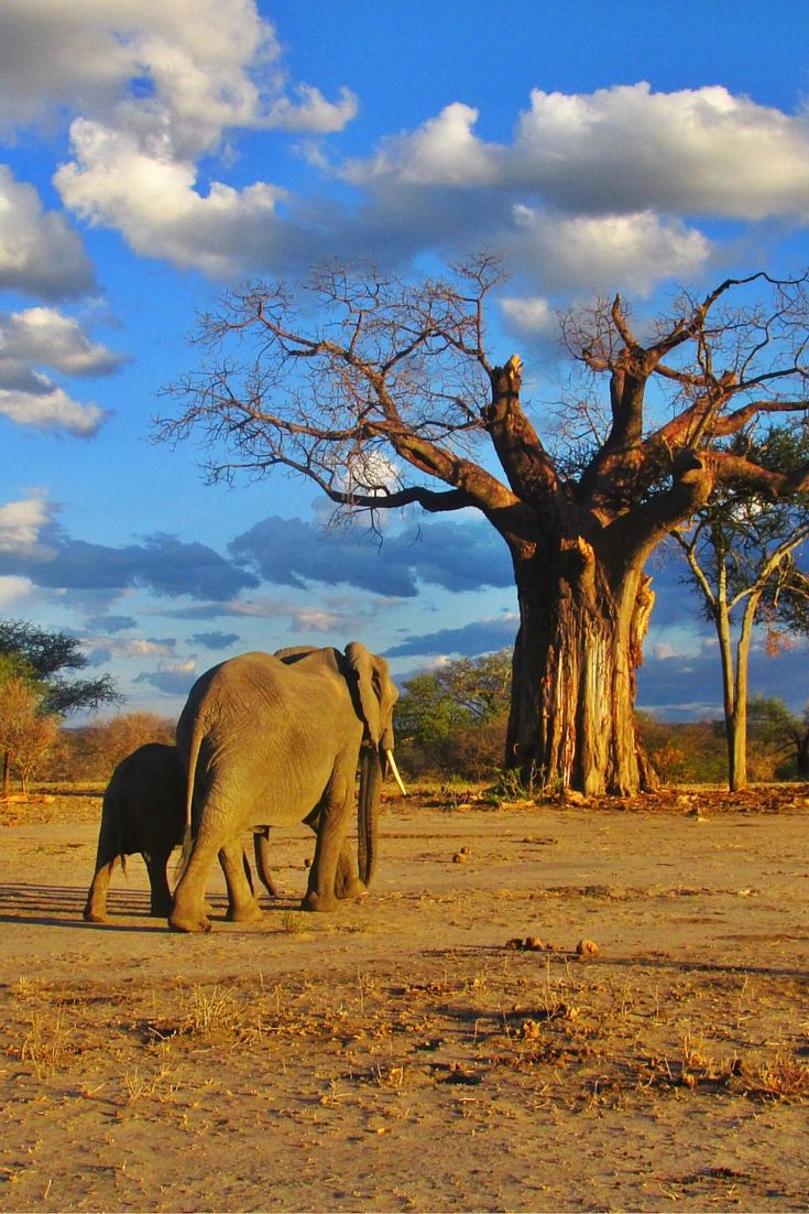 66 best 8. Travel - Tanzania, Africa images on Pinterest | Beautiful ...