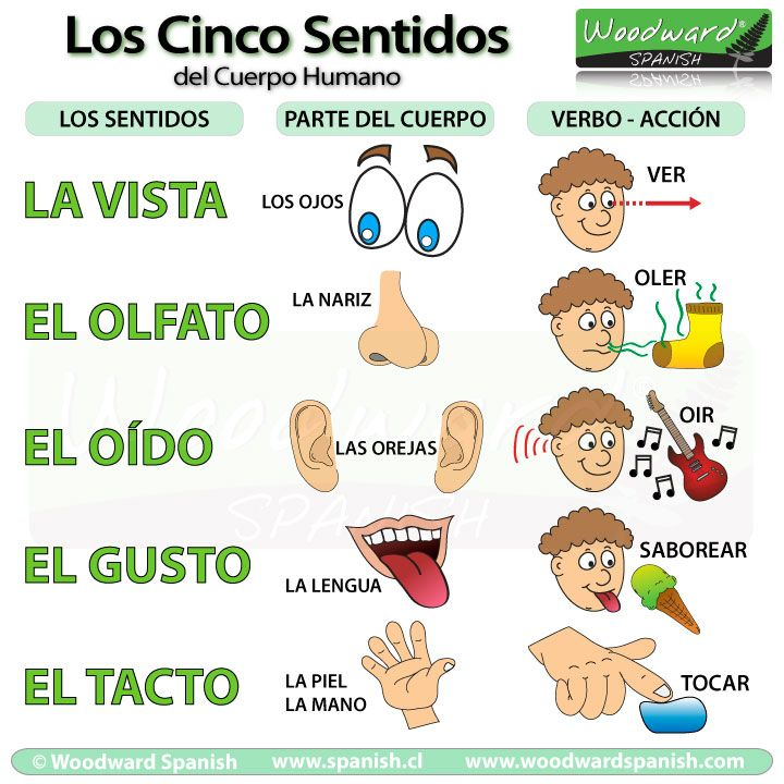 Los cinco sentidos del cuerpo humano - la vista, el olfato, el oído, el gusto, el tacto. The Five Senses - The best way to learn Spanish is visiting a country. Come and visit us at www.Going2Colombia.com