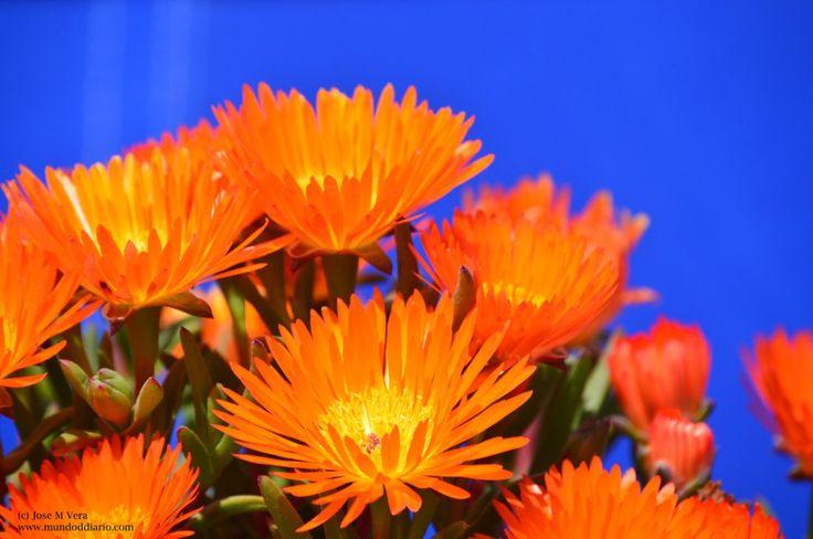 Hice Del Baño Color Amarillo:Más de 1000 ideas sobre Paredes Naranja en Pinterest