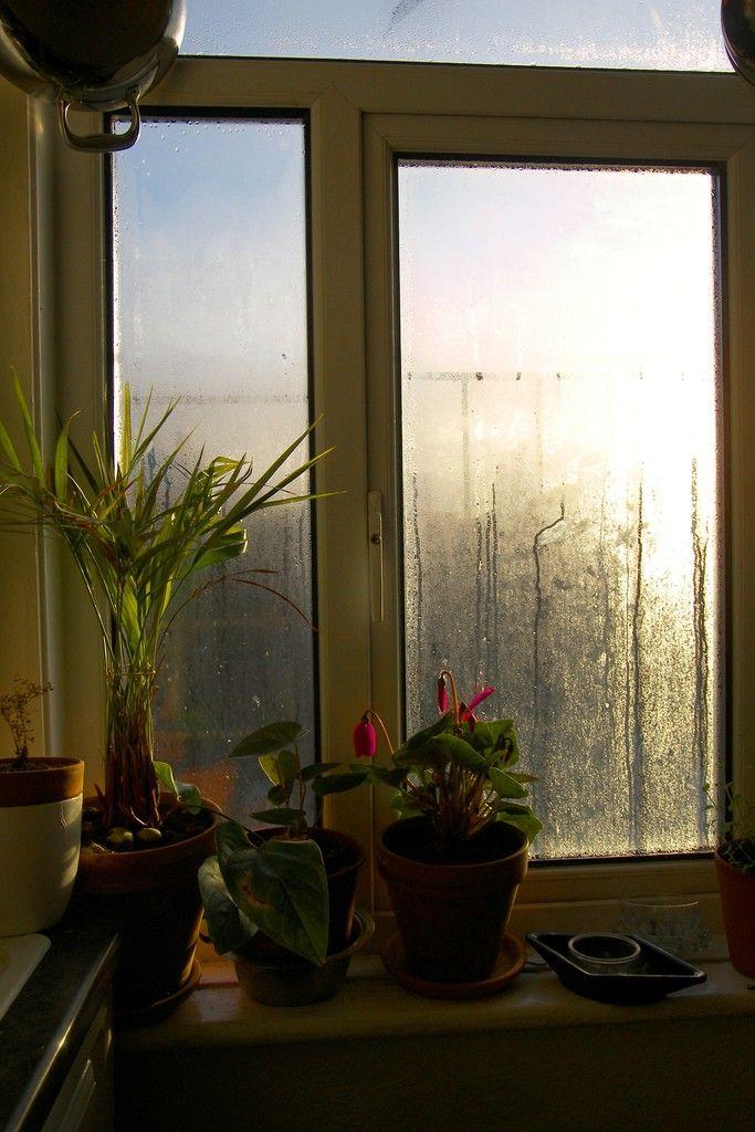 Indoor Humidity Levels – How To Reduce Indoor Humidity
