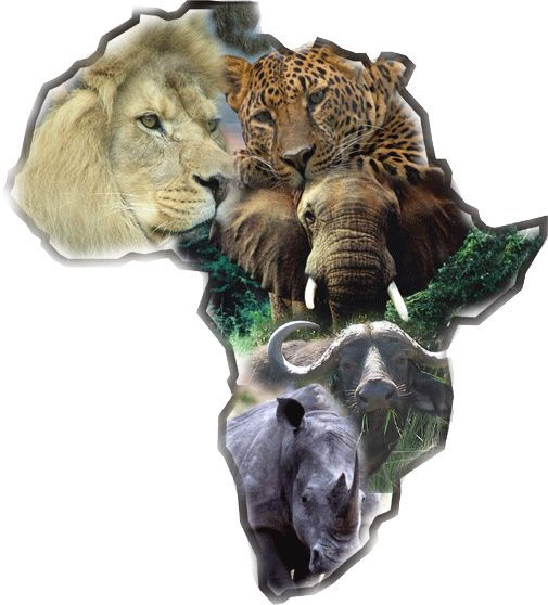 Hunt the big five: lion, cheetah, elephant,cape buffalo, and rhino...better start saving $$$$$$$