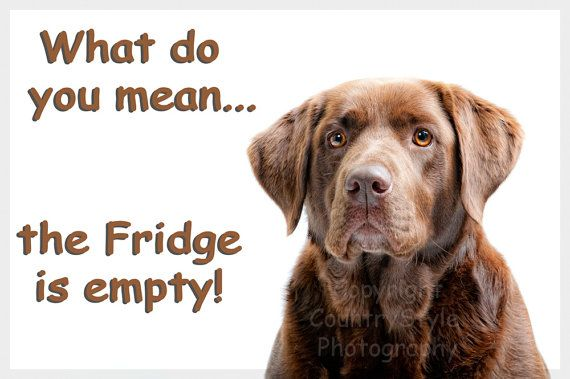 Chocolate Labrador Funny Fridge Magnet Gift by Chaffys on Etsy