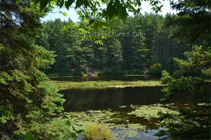 Algonquin Park Trails, Camping in Ontario, Old Railway (Mew to Pog Lake) #algonquinpark