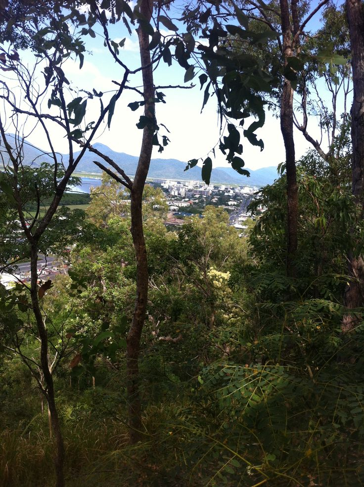 View of Cairns city from Red Arrow track