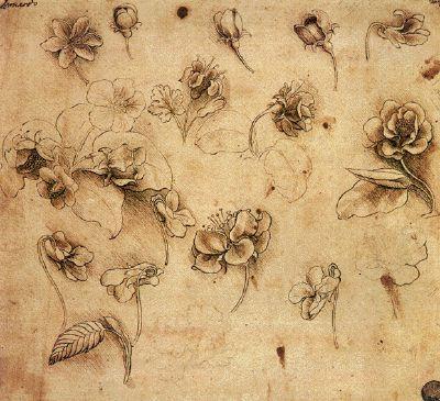 LEONARD DE VINCI Vers 1485 - Etude de fleurs