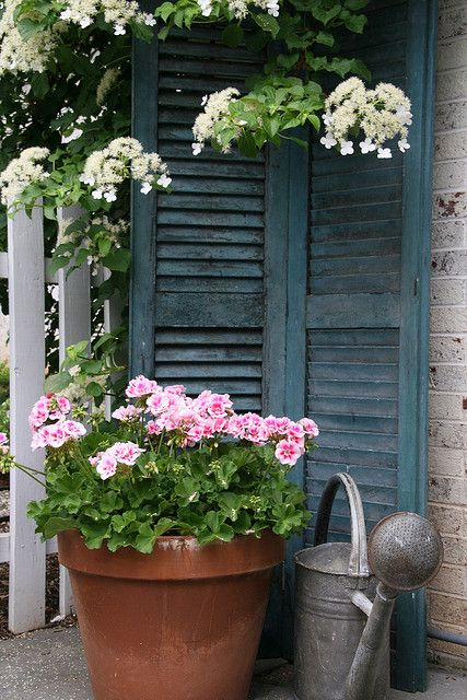 """""""Something about shutters & Geraniums. American."""": Plants Can, Modern Gardens, Ideas, Old Shutters, Blue Shutters, Watering Cans, Patio Corner, Pink Geraniums, Flowers"""