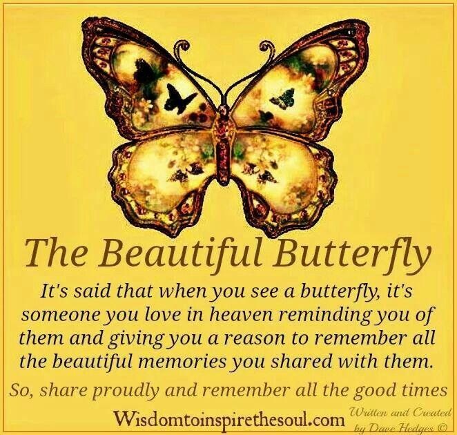 The Beautiful Butterfly....