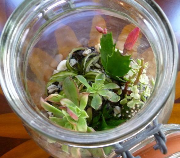 Come trasformare un barattolo di vetro in un terrario http://ambientebio.it/come-trasformare-un-barattolo-di-vetro-in-un-terrario/
