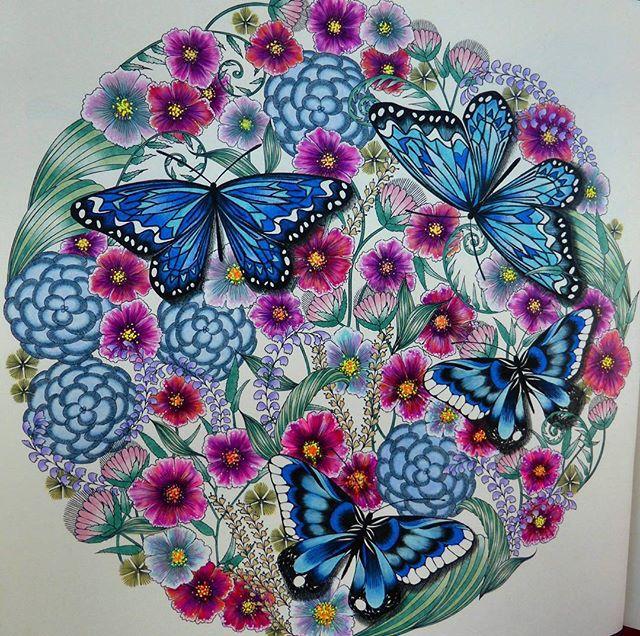 Adult Coloring Books Colouring Animal Kingdom Profile Pallets Butterflies Landscapes Mandalas