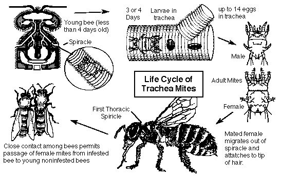 35 best images about important bee charts on pinterest