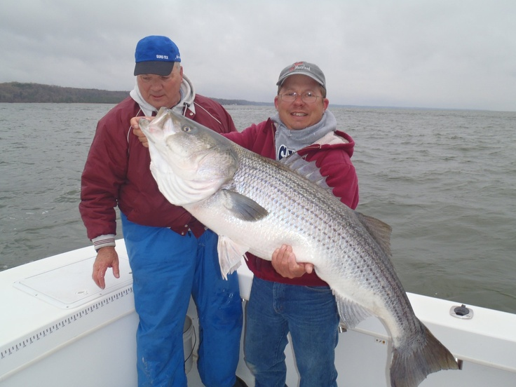 Chesapeake bay walleye pete four seasons guide for Chesapeake bay striper fishing
